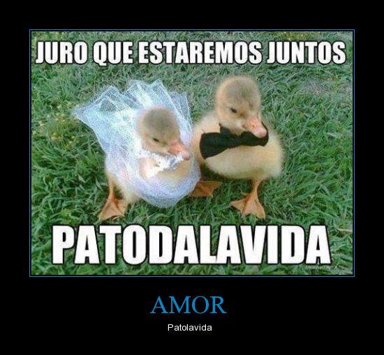 Viñetas, humor, fotos graciosas, jajjajajjajaja dese Juegos-de-palabras-animales_amor1