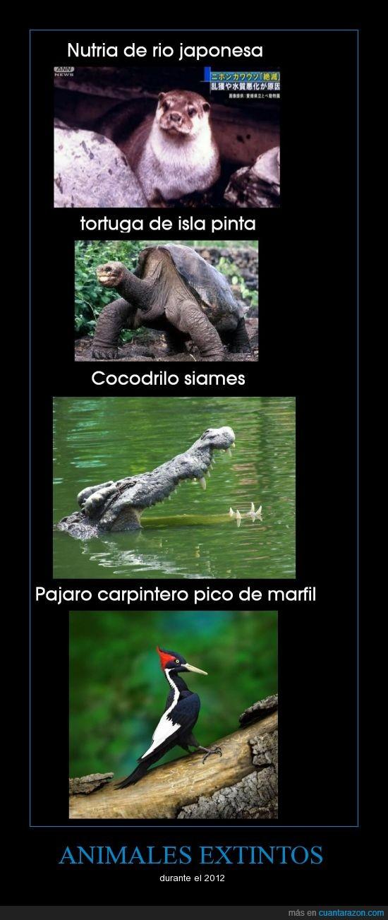 animales_extintos