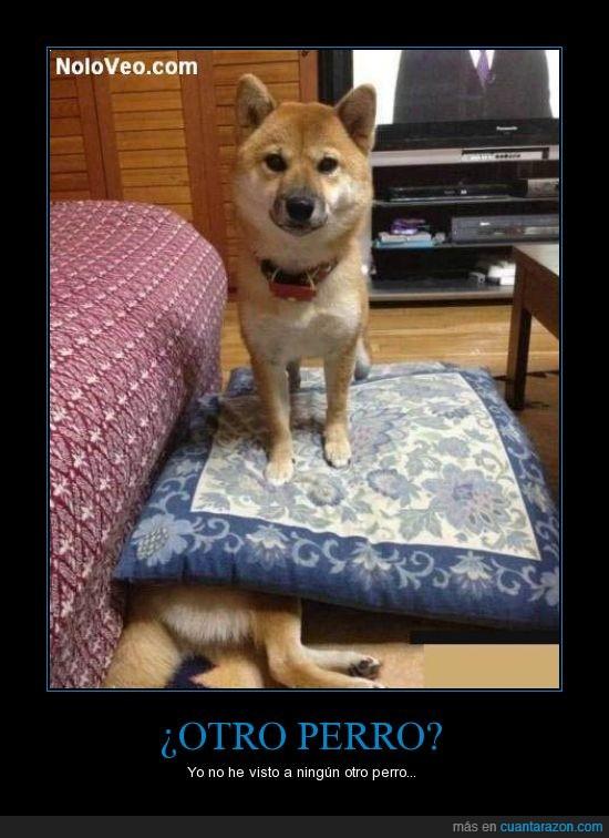 presente perfecto otro_perro