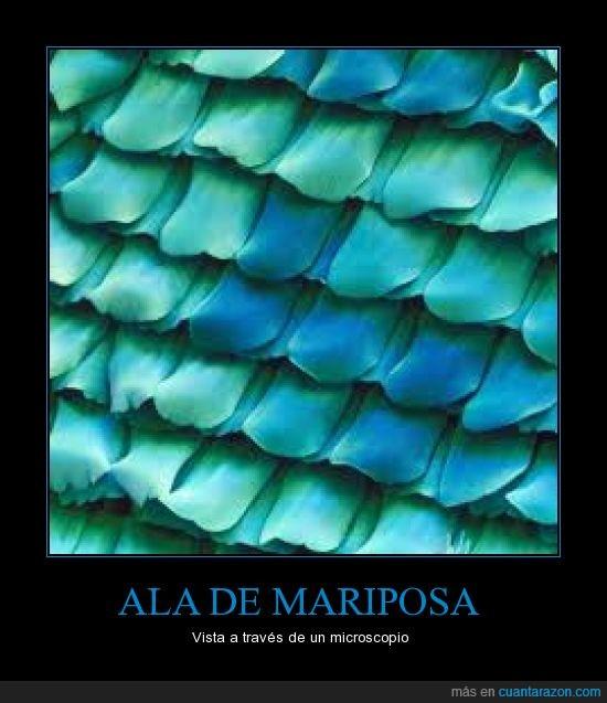 ala_de_mariposa