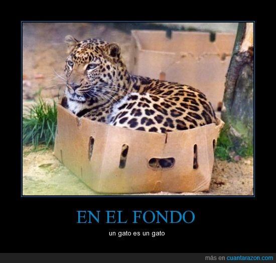 en_el_fondo