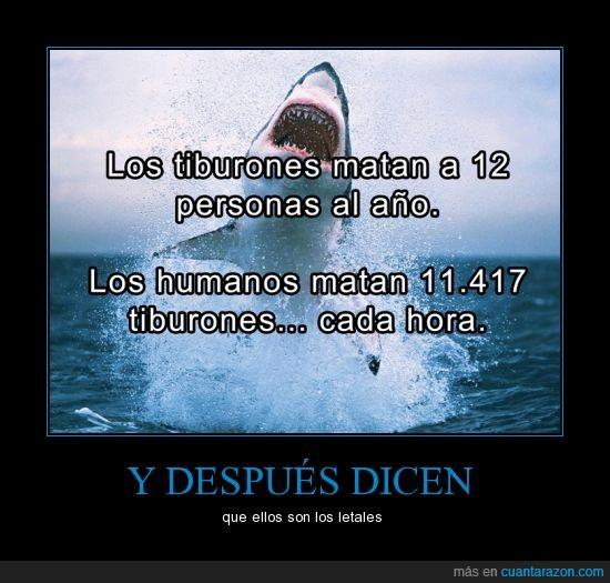 a personal_tiburones