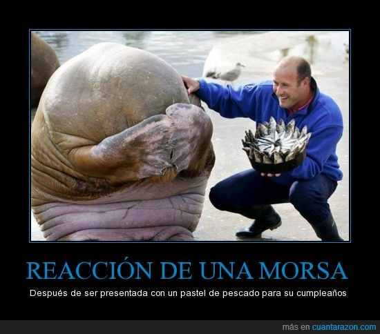 reaccion_de_una_morsa
