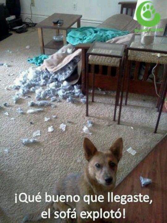 pret sofa explotó