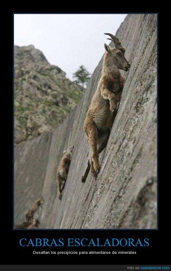 para_cabras_escaladoras