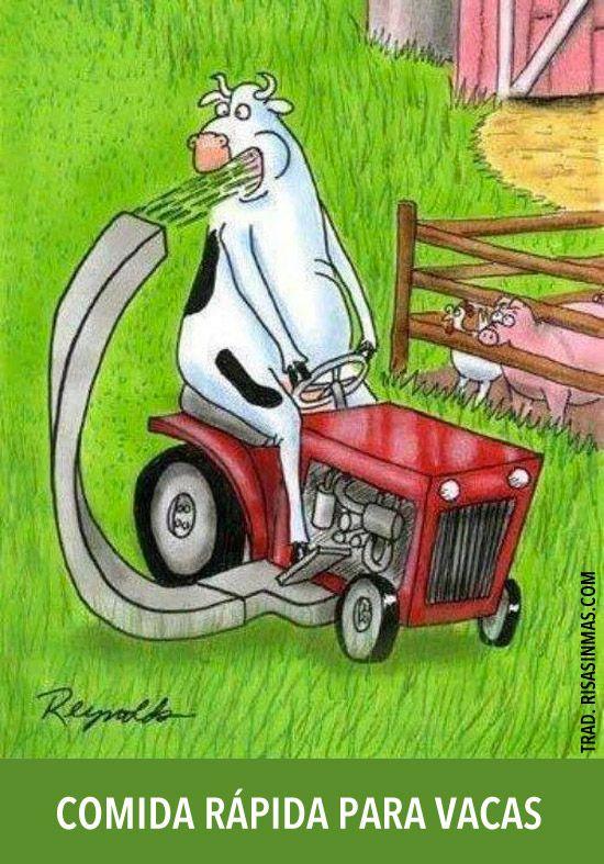 comida rápidas para vacas