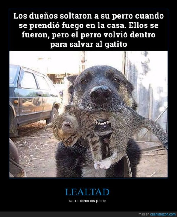 lealtad. perro