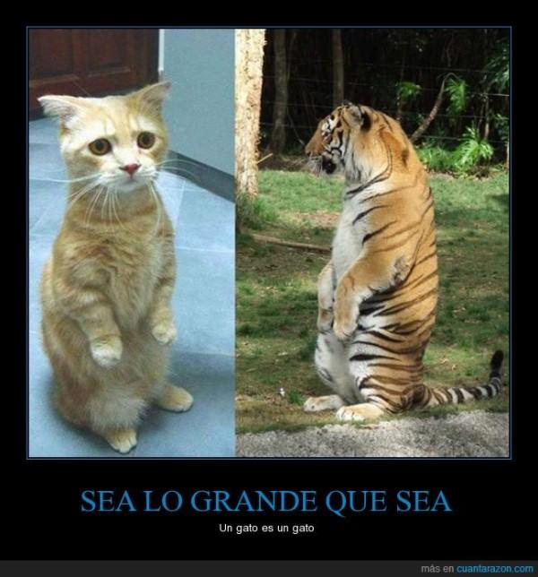 subj_sea_lo_grande_que_sea