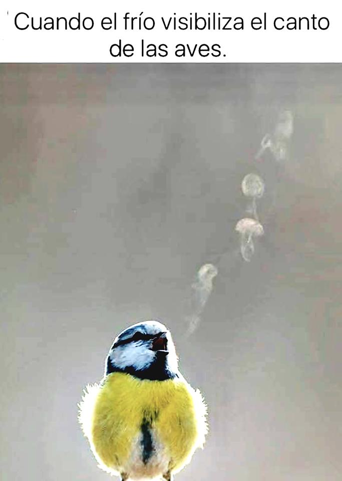 cuando el frío visibiliza el canto de las aves